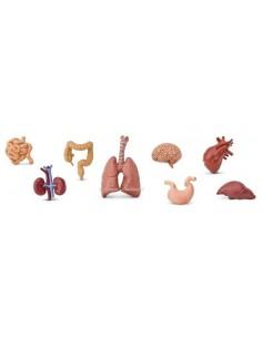 8 figurines Organes du corps humain