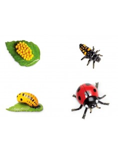 Cycle Coccinelle