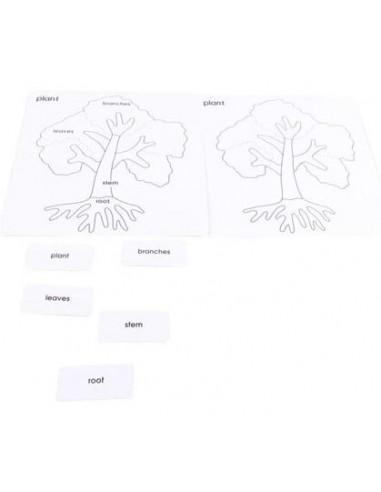 Cartes nomenclature Arbre