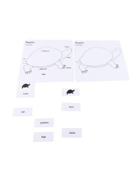 Cartes nomenclature Tortue