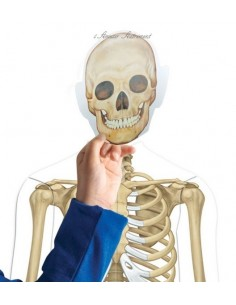 Le corps humain magnétique
