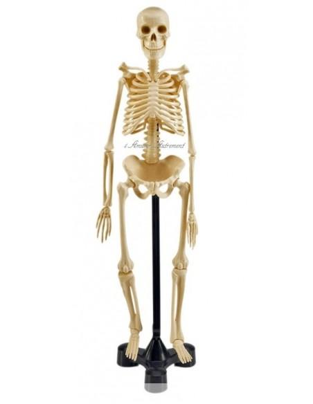 Modèle de squelette